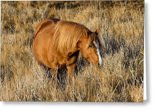 Wildlife Refuge. Greeting Cards - Chincoteague Pony Greeting Card by Bill Swindaman