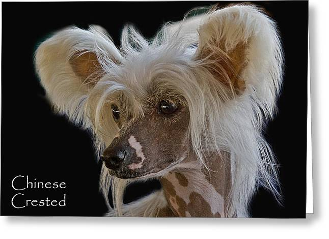 Chinese Crested Greeting Card by Larry Linton