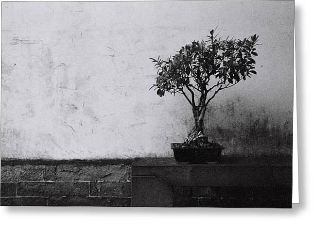 Chinese Garden No.4 / Shoot By Film Greeting Card by Fan Ying Hua