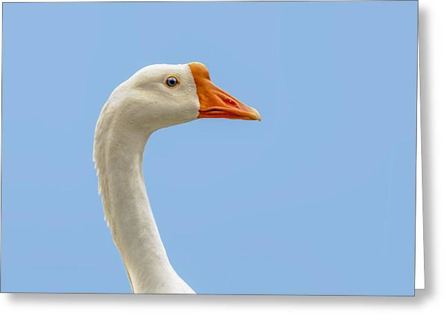 Geese Greeting Cards - Chinese Goose Portrait Greeting Card by Sharon Norman