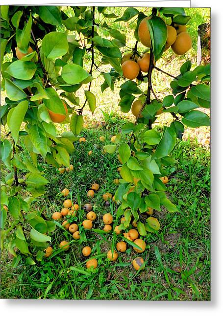 Chinese Pear 1 Greeting Card by Lanjee Chee