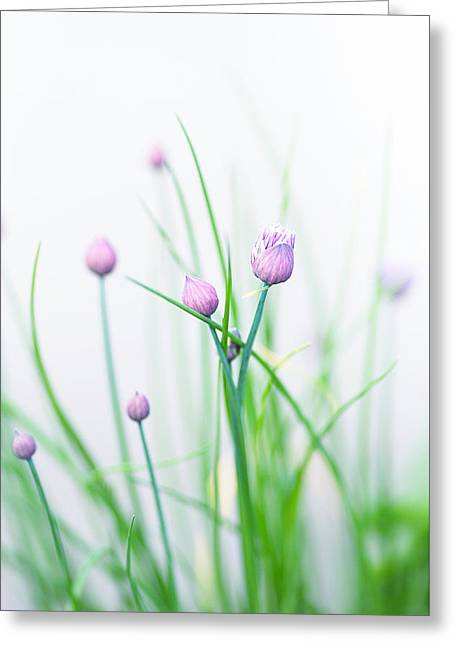 Chives Greeting Cards - Chives 1 Greeting Card by Rebecca Cozart