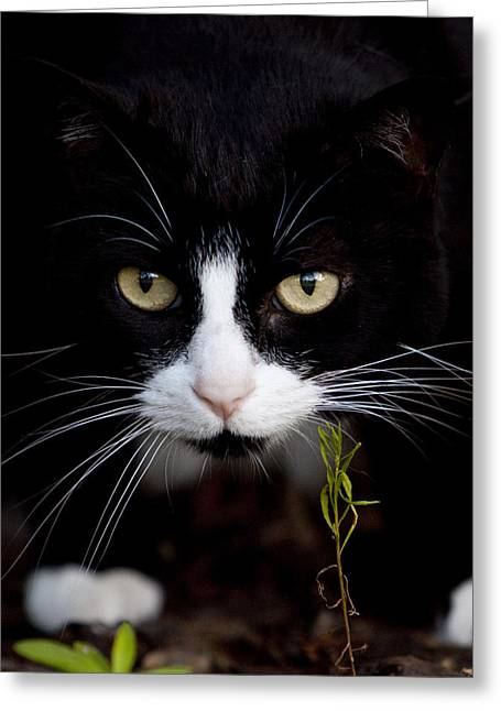 Cats Eye Greeting Cards - Chloe Greeting Card by Dustin K Ryan