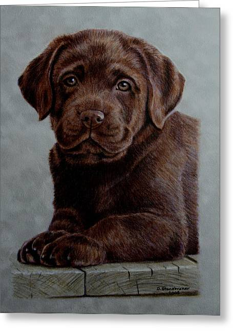 Labs Drawings Greeting Cards - Chocolate Baby Greeting Card by Debbie Stonebraker