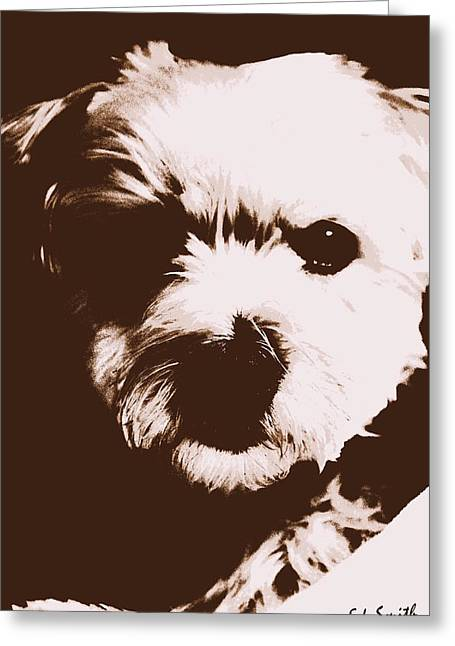 Maltese Greeting Cards - Chocolate Charlie Greeting Card by Ed Smith