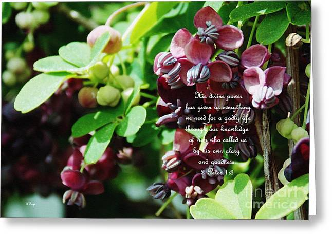 Power Plants Greeting Cards - Chocolate Divine - Verse Greeting Card by Anita Faye