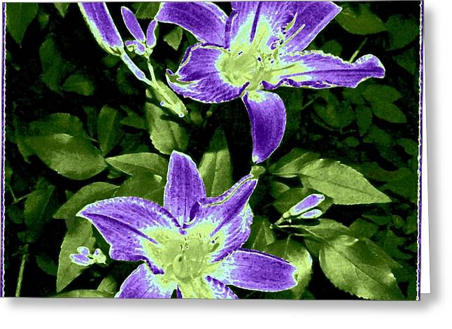 Choice Purple Lilies Greeting Card by Will Borden