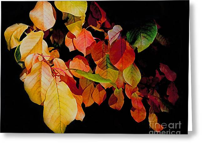 Chokecherry Leaves Greeting Card by Terril Heilman