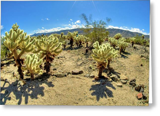 Thorny Desert Plant Greeting Cards - Chollo Garden in Bloom Greeting Card by Connie Cooper-Edwards