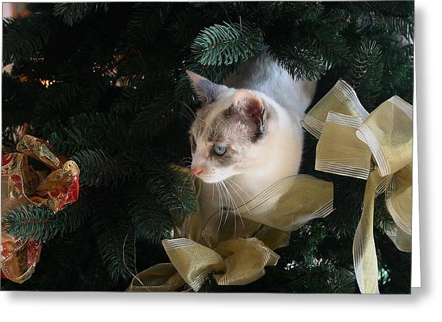 Pictures Of Cats Greeting Cards - Christmas Cat Greeting Card by Fay Geddes