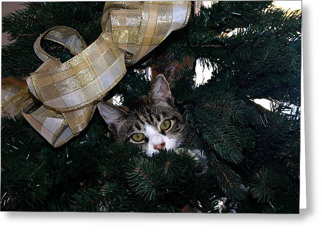 Pictures Of Cats Greeting Cards - Christmas Cat II Greeting Card by Fay Geddes