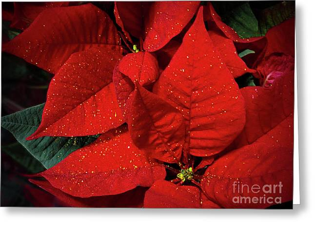 Christmas Decoration Greeting Card by Jasna Dragun
