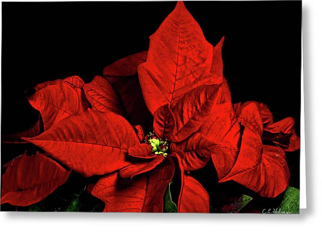 Ocular Perceptions Greeting Cards - Christmas Fire Greeting Card by Christopher Holmes