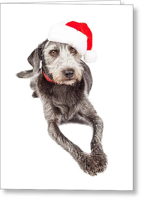 Christmas Santa Terrier Dog Laying Greeting Card by Susan  Schmitz