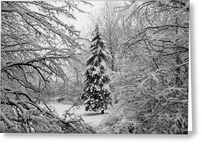 Indiana Landscapes Greeting Cards - Christmas Snow Greeting Card by Michael L Kimble