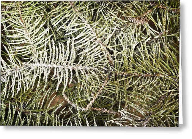Christmas Tree Background Greeting Card by Donald  Erickson