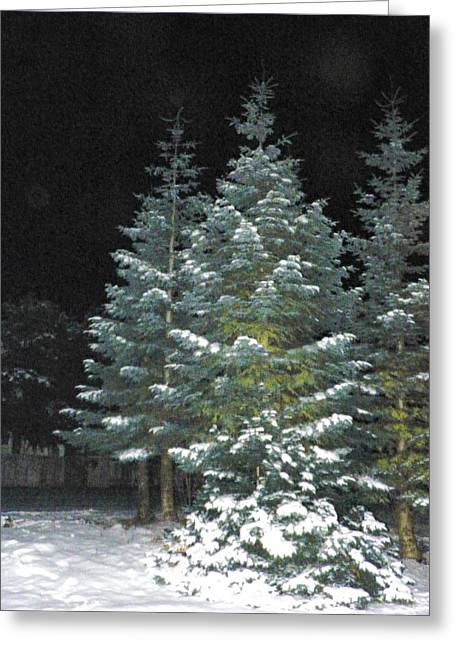 Fir Pyrography Greeting Cards - Christmas Tree Greeting Card by Laurie Kidd