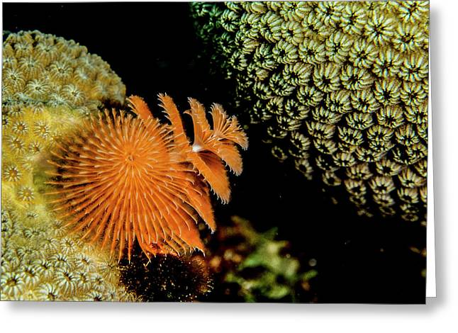 Christmas Tree Worm In The Corner Greeting Card by Jean Noren