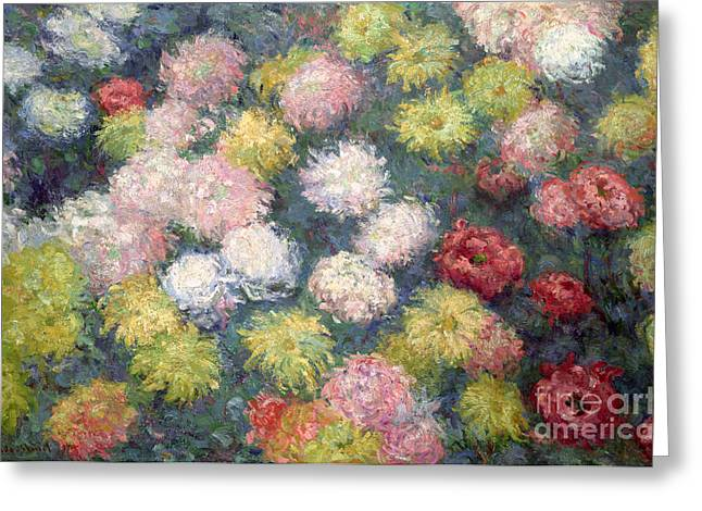 Color Colorful Greeting Cards - Chrysanthemums Greeting Card by Claude Monet