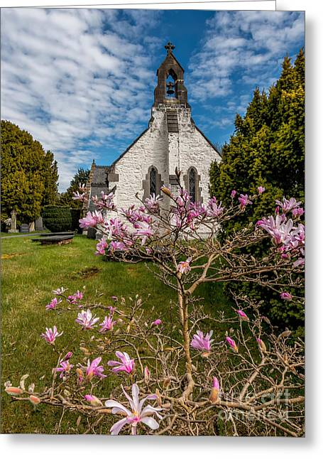 Pink Blossoms Digital Art Greeting Cards - Church Blossom Greeting Card by Adrian Evans