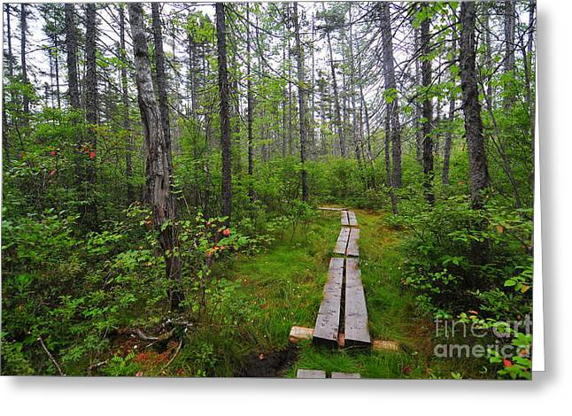 Church Pond Trail Greeting Card by Catherine Reusch  Daley