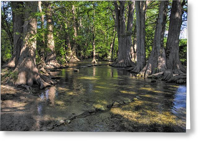 Cibolo Creek At The Nature Center Greeting Card by Lynn Bauer