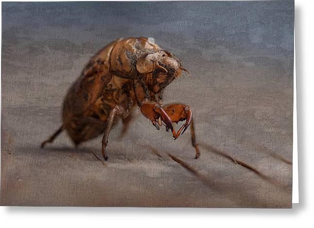 Cicada Shell Greeting Card by Tom Mc Nemar