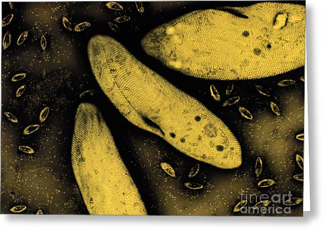 Ciliate Greeting Cards - Ciliate Paramecium LM Greeting Card by Greg Antipa
