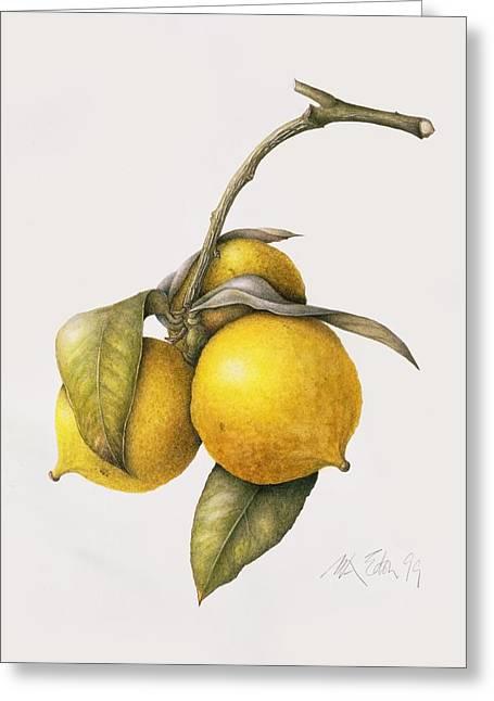 Citrus Bergamot Greeting Card by Margaret Ann Eden