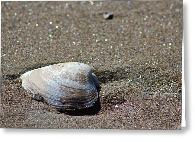 Coastal Maine Greeting Cards - Clam as is Greeting Card by  Judy Bernier