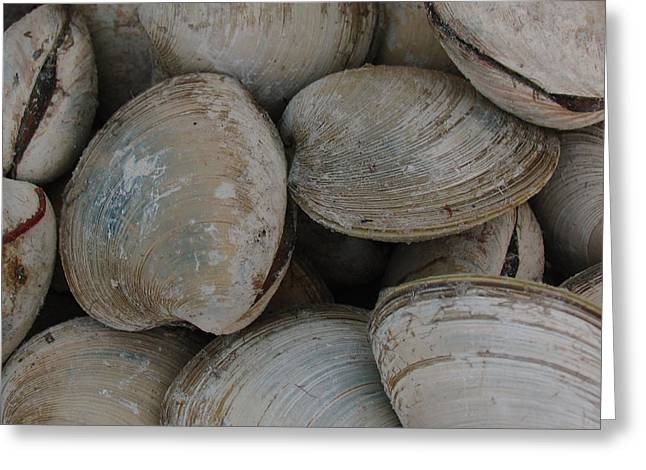 Clam Shells Greeting Card by Juergen Roth