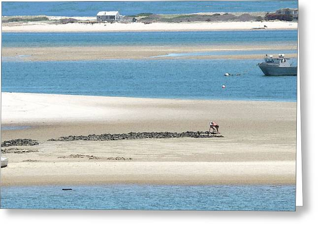 Chatham Greeting Cards - Clams at Low Tide Greeting Card by Heather MacKenzie