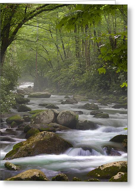 Tennessee River Greeting Cards - Clarity and Perception Greeting Card by Nunweiler Photography