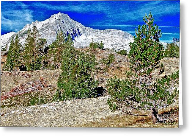 Whitebark Pines Greeting Cards - Clarks Nutcracker Country Wide Greeting Card by Scott L Holtslander