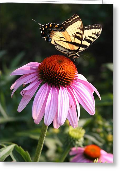 Butterlfy Greeting Cards - Classic Summer Scene Greeting Card by Heidi Hermes