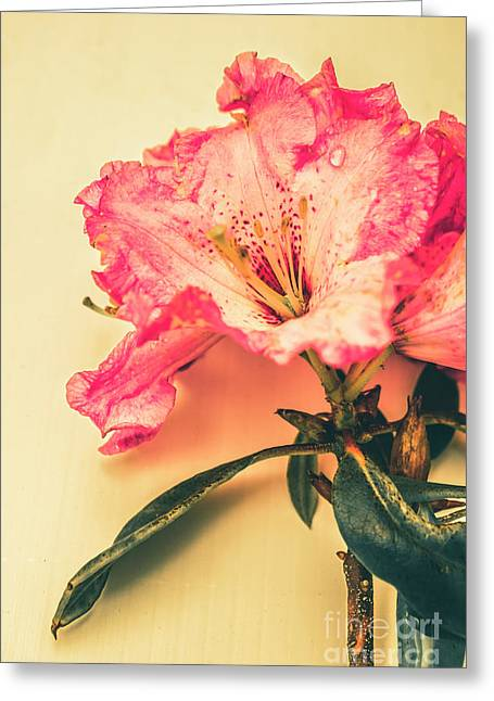 Classical Pastel Flower Clipping Greeting Card by Jorgo Photography - Wall Art Gallery