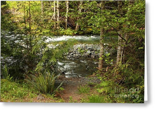 Clear Mountain Stream Greeting Card by Carol Groenen