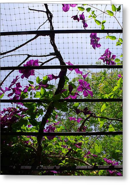 Clematis I Greeting Card by Anna Villarreal Garbis