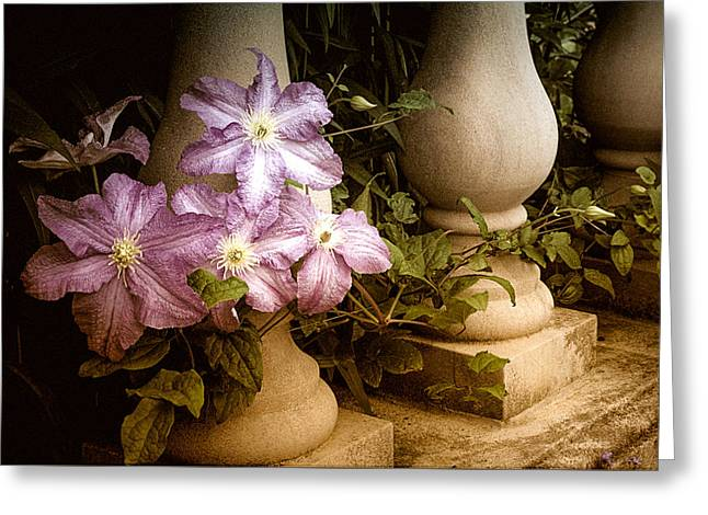 Julie Palencia Photography Greeting Cards - Clematis in the Garden Greeting Card by Julie Palencia