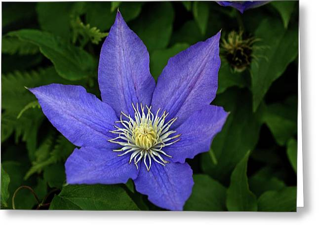 Clematis Greeting Card by Sandy Keeton