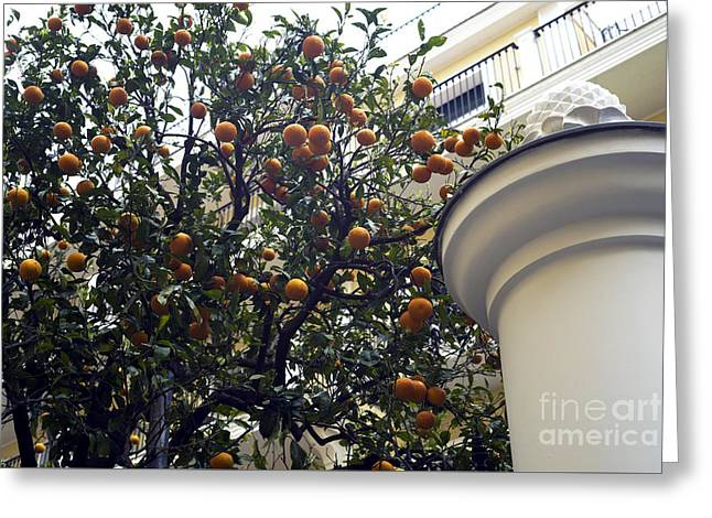 Fruit Tree Photographs Greeting Cards - Clementine Tree in Sorrento Greeting Card by John Rizzuto