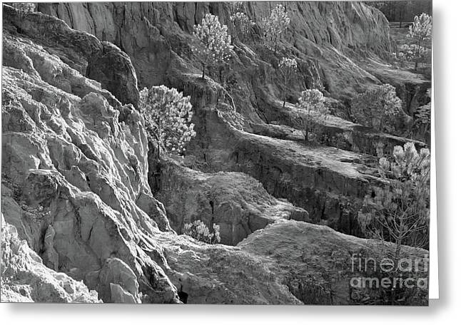 Ludo Greeting Cards - Cliff Pine Trees in Monochrome Greeting Card by Angelo DeVal
