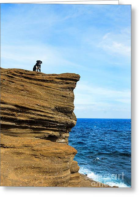 Puppies Photographs Greeting Cards - Cliffside Cali Greeting Card by Kristin Lam