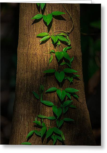 Vine Leaves Pyrography Greeting Cards - Climbing Vine Greeting Card by Rick Strobaugh