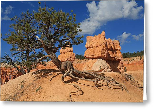 Tree Roots Greeting Cards - Clinging To Life Greeting Card by Donna Kennedy