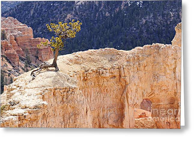 Defiance Greeting Cards - Clinging to the Top of the Wall Greeting Card by Larry Ricker