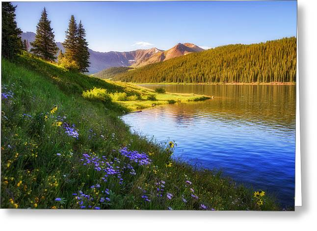 Wildflower Fine Art Greeting Cards - Clinton Gulch Greeting Card by Darren  White