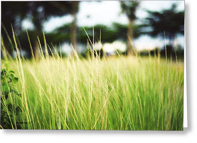 Close Focus Nature Scene Greeting Cards - Close-up grass Greeting Card by Nguyen Truc