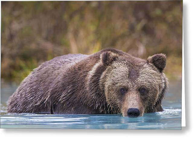 Born In The Usa Greeting Cards - Close Up Of A Coastal Brown Bear  Ursus Greeting Card by Rob Daugherty