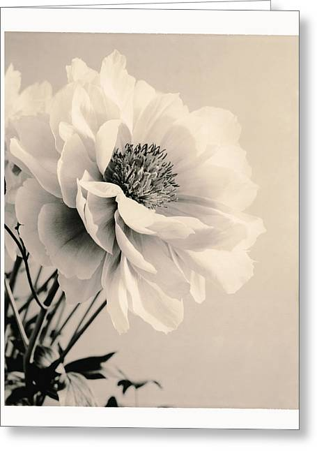 Blossoming Greeting Cards - Close-up Of Flower With Filter Greeting Card by Gillham Studios